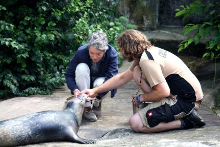 Ina_Hartwig_Seehund_copyright_Zoo_Frankfurt