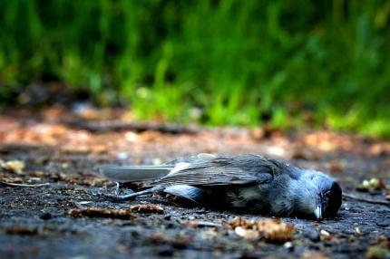 aktuelles-zur-vogelgrippe