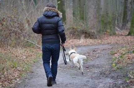 Zusammenleben mit Hunden -