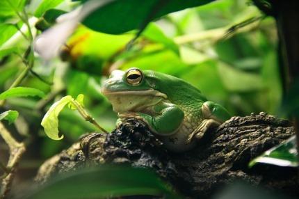 Frühjahrswanderungen der Amphibien -