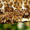 Erstes internationales Bienenrennen im MMK
